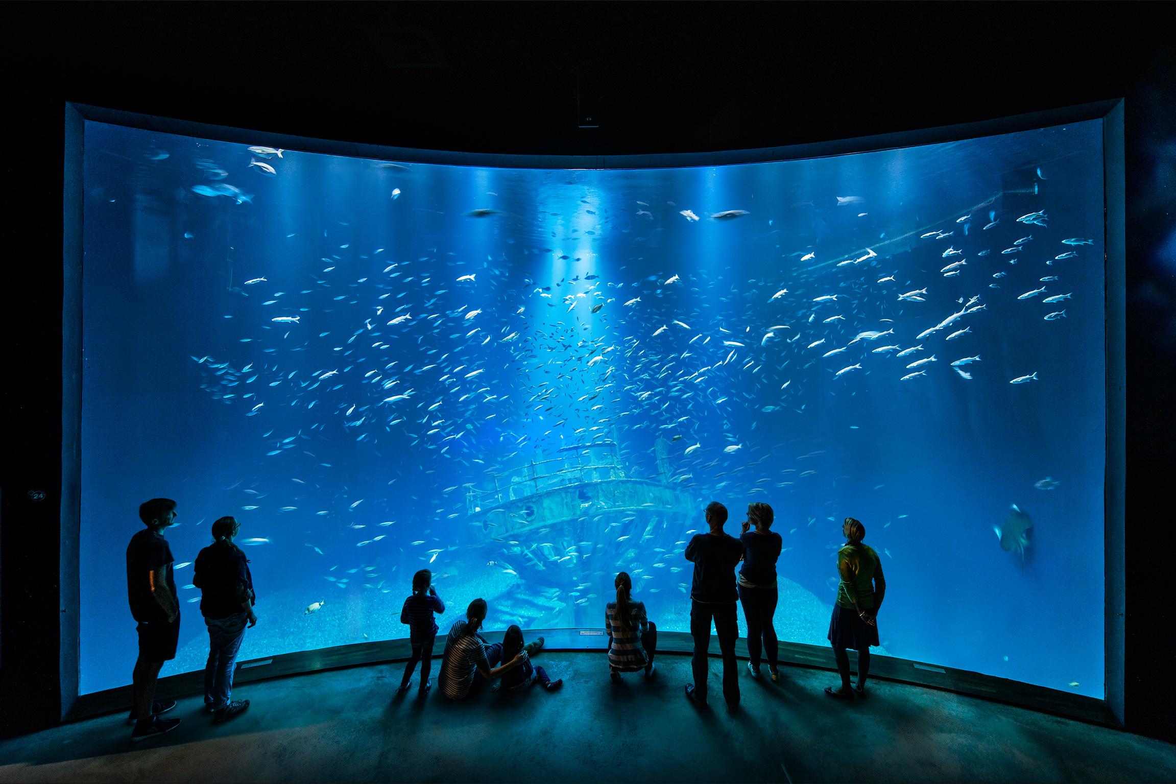 Meeresmuseum Stralsund Kommende Veranstaltungen